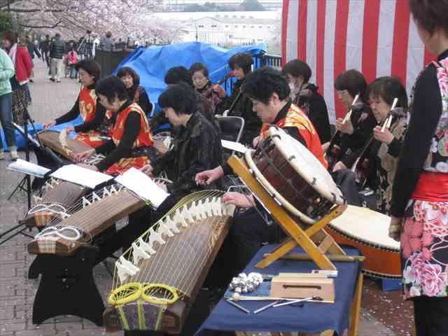 吉田大橋さくら祭り2014