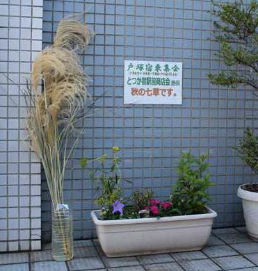ススキ街道 秋の七草2014