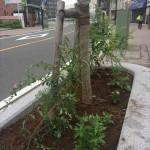 戸塚宿東集会すすき街道2015/09/27