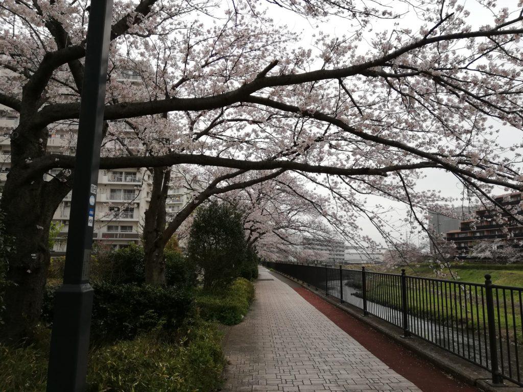 とつか宿の桜2020